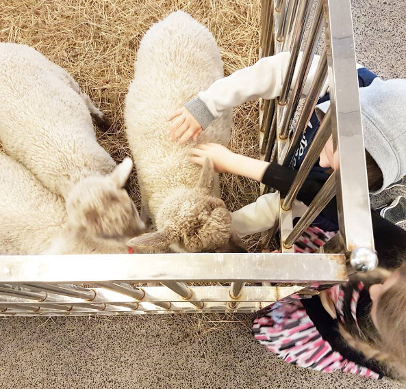 spring lambs in-store at The Department Store