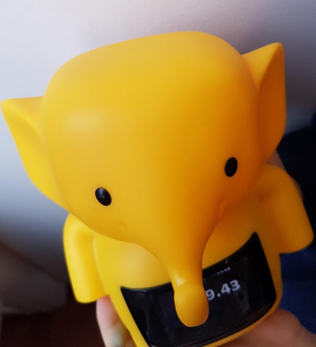 clever-kash-elephant