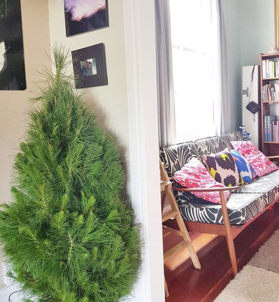 Better late than never... I got a Christmas tree, its name is Chris Pine